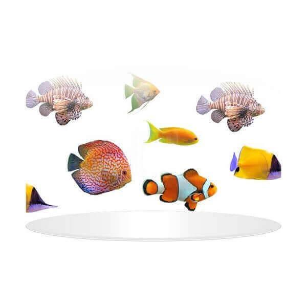 Fish pendant lamp